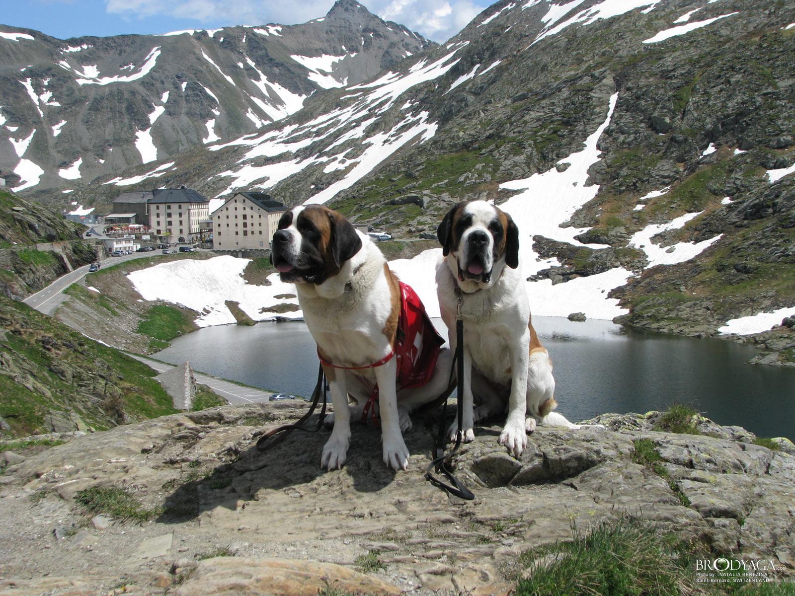 Grand-Saint-Bernard-Switzerland-1286773012www.brodyaga.com_